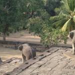Realistische Elefantenstatuen kann man vor allem im Tempel Bakong entdecken