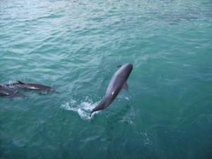 Ob es im MOAP in Mindanao auf den Philippinen immer noch Delphine gibt, kann ich erst im nächsten Reisebericht erläutern