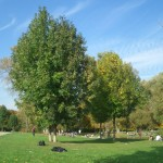 Der englische Garten, die Isarauen oder der Westpark sind bekannte Grünflächen in München