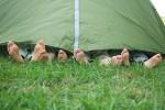 Günstig übernachten in München und im Umland - Zeltplätze in Bayern - Münchner Hotels