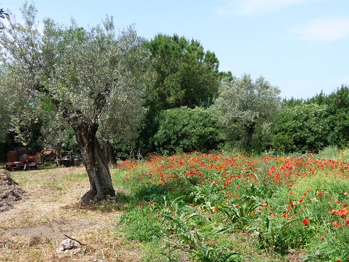 Nationalpark Cilento