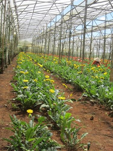 Blumen in Vietnam