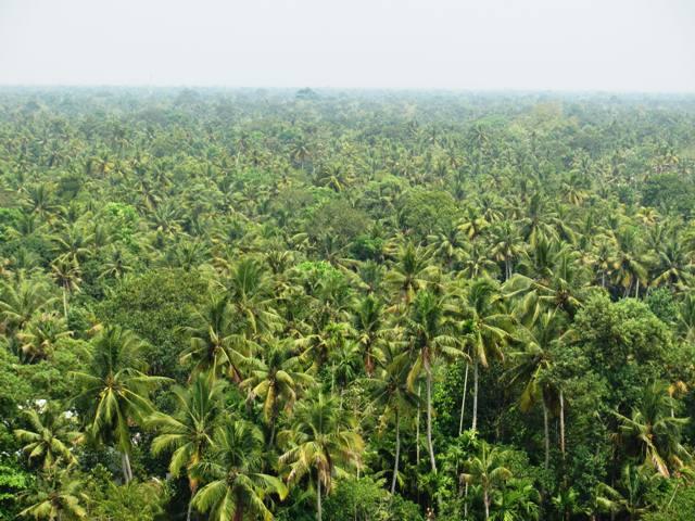 Kokospalmen soweit das Auge reicht