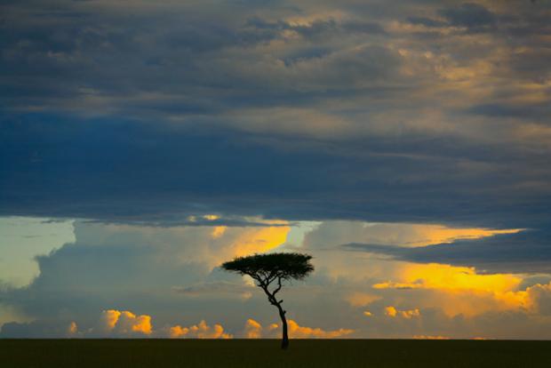 Unendlich hohe Himmel, unendlich weite Himmel. Wolken, die wie Schiffe segeln und eine Abendsonne, die noch einmal in ihre Farbtöpfe greift: das ist die Massai Mara. © Willi Dolder