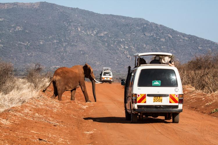 Die roten Elefanten der beiden Tsavo-Parks sind ein Kennzeichen dieses Gebiets. © Willi Dolder