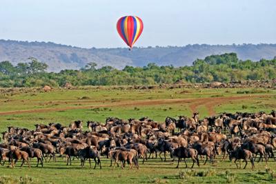 Ab Juli bis Oktober findet die überwältigende Wanderung der Gnus, Zebras, Topis und Thomson Gazellen statt. © Willi Dolder
