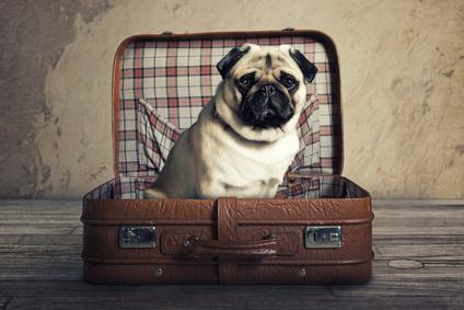 Wenn der Vierbeiner mit auf Reisen geht - Bild: © lassedesignen - Fotolia.com