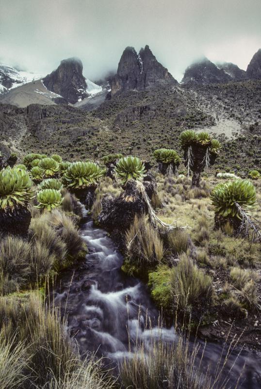 An der Westseite des Mount Kenya auf etwa 3800 m ü.M. © Willi Dolder