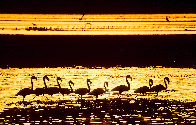 Zwergflamingos bei Sonnenaufgang am Lake Bogoria. © Willi Dolder