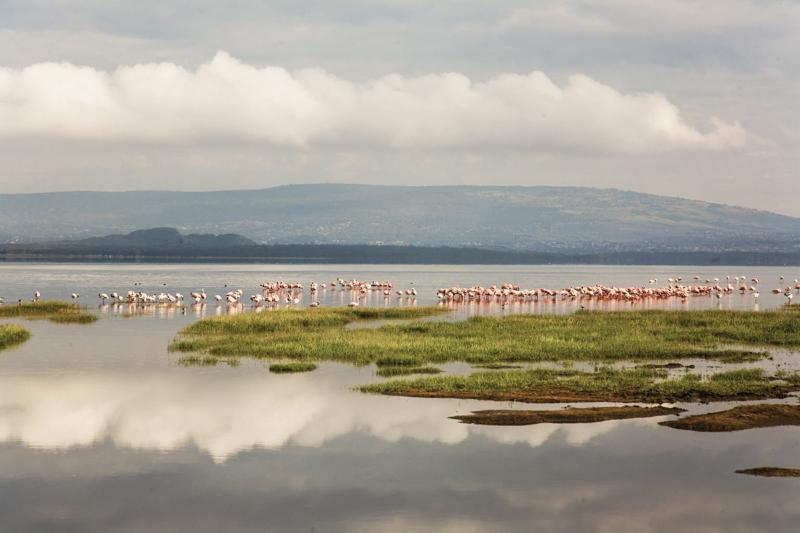 Im Lake Nakuru Nationalpark wurden bisher nahezu 500 verschiedene Vogelarten gezählt. © Willi Dolder
