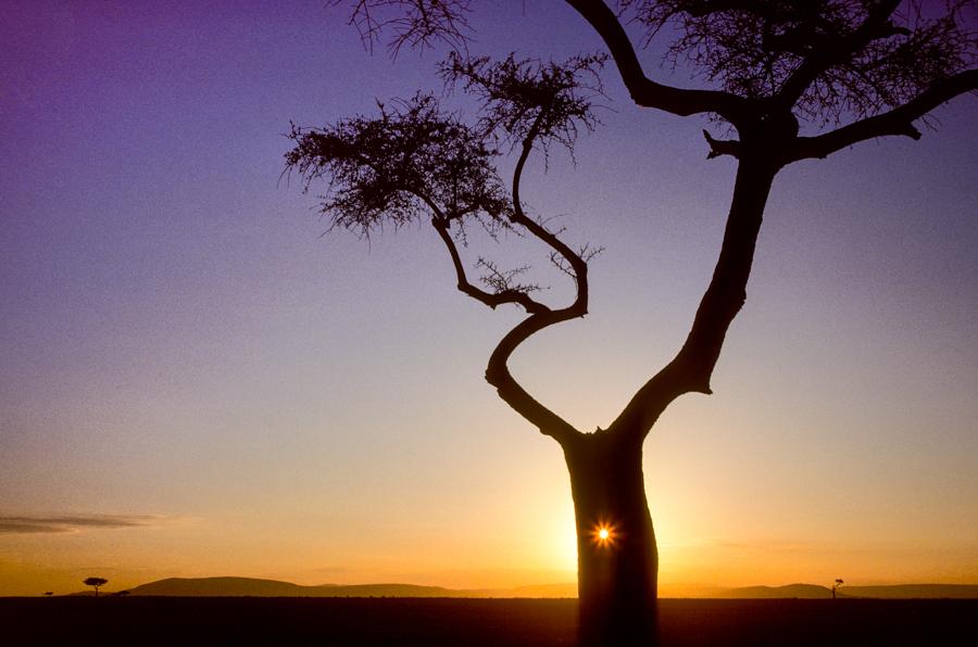 Die aufgehende Sonne scheint durch ein Loch im Baum. © Willi Dolder
