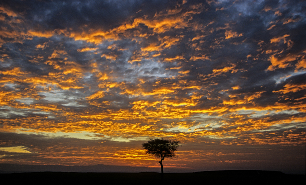 Abend in der Massai Mara - kurze aber unvergessliche Momente. © Willi Dolder