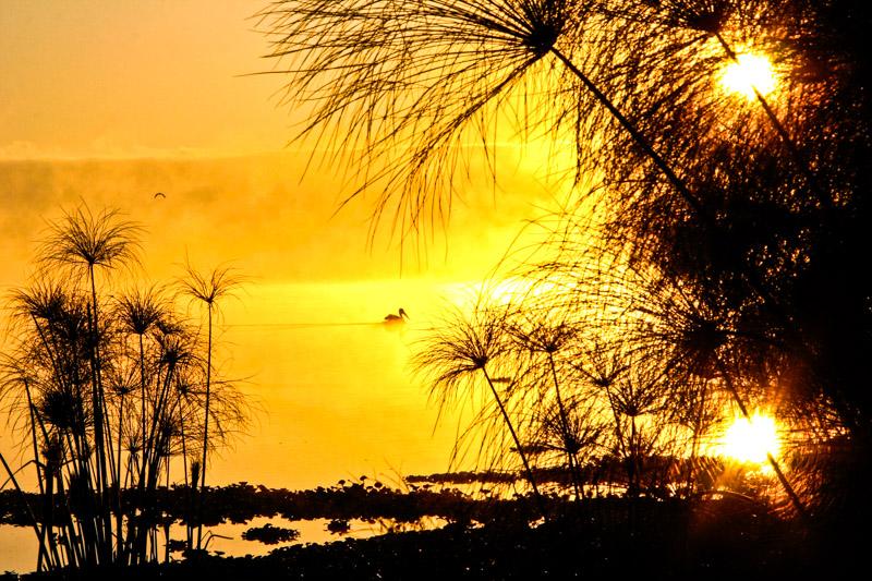 Sonnenaufgang am Lake Naivasha, Pelikan im Nebel. © Willi Dolder